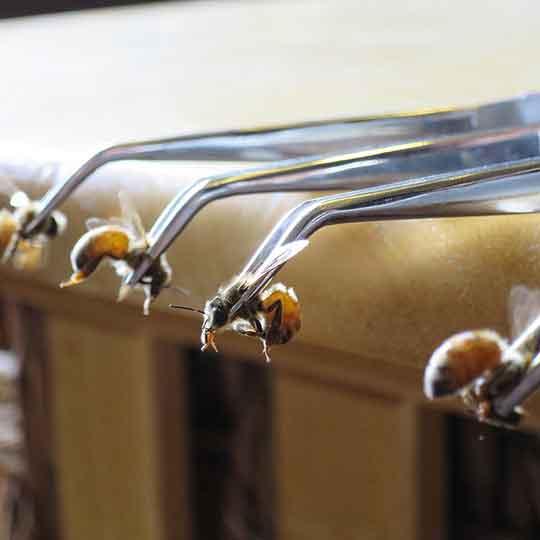 زنبور تراپی چیست